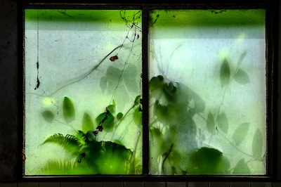 Gábor-Erdelyi-sony-plants-behind-dirty-window